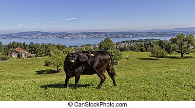 Magnificent landscape of Swiss