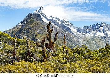 magnificent landscapes of New Zealand - magnificent fabulous...