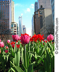 Magnificent Mile with blooming tulips
