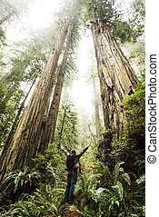 Magnificent Redwood Forest
