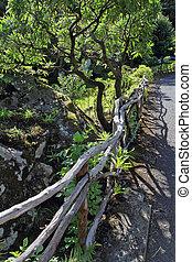 magnificently, arbustos, ao longo, um, footpath