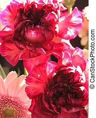 magnifique, fleurs