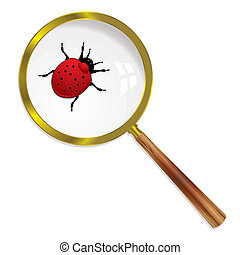 magnify ladybird - Ladybug magnified under a lens with...