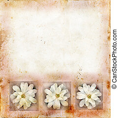 Magnolia Blossoms on Grunge Background