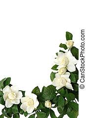 Magnolia Border - Magnolia flower border