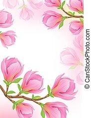 magnolia, branche, printemps, fond, beau