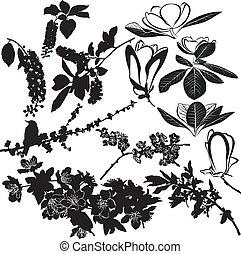 magnolia cherry and apple