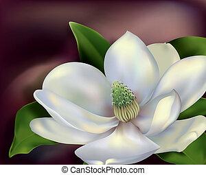 Magnolia Flower - Magnolia close-up. Digital illustration....
