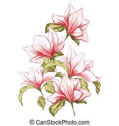 Magnolia flower in beautiful blossom