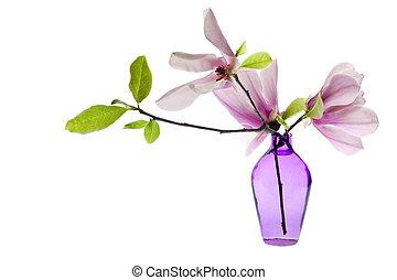 magnolia, jane, flores, en, un, florero púrpura, aislado