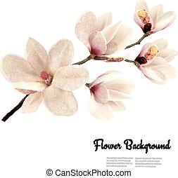 magnolia., kwiat, tło, kwiat, wektor, gałąź, biały