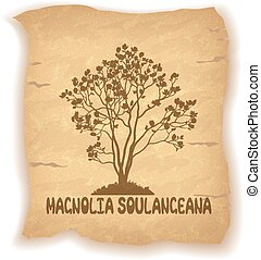 Magnolia Plant on Old Paper