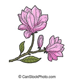 Magnolia tree flower color sketch engraving vector illustration. T-shirt apparel print design. Scratch board imitation. Black and white hand drawn image.
