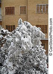 magnolia tree under snow