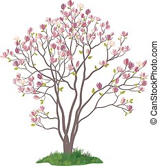 Magnolia Tree with Flowers and Grass - Spring Magnolia Tree...