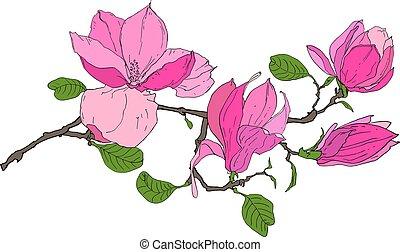 magnolie, blumen, zweig