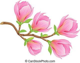 magnolie, fruehjahr, zweig, rosa