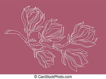 magnolie, zweig, drawing.