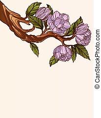 magnolie, zweig