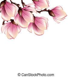 magnolie, zweig, freigestellt