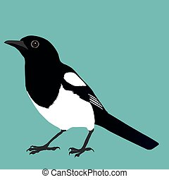 Magpie - An illustration of a magpie