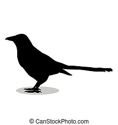 Magpie bird  black silhouette animal. Vector Illustrator.