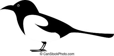 Magpie bird, illustration, vector on white background.