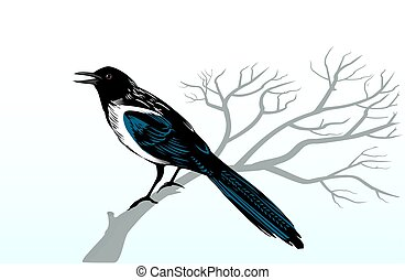 Magpie bird perching on a tree