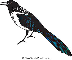 Magpie bird, vector illustration