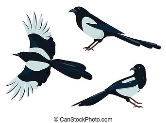 Magpie birds set. Magpies in different poses