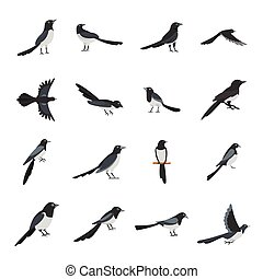 Magpie crow bird icons set flat style