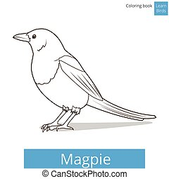 Magpie learn birds coloring book vector
