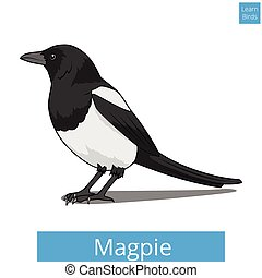Magpie learn birds educational game vector illustration