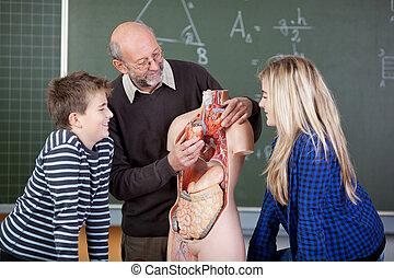 magyarázó, diákok, anatómiai, model's, hangerők, tanár