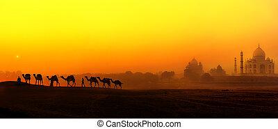 mahal, palais, india., tajmahal, panoramique, silhouettes, indien, coucher soleil, taj, chameaux, paysage, vue