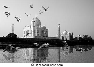 mahal, vuelo, reflejado, across., río yamuna, pájaro, taj, ...