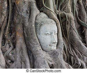 mahathat, 頭, 木, 砂岩, 仏, タイ, ayutthaya, ワット, 定着する