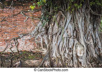 mahathat, tête, ancien, mur, arbre, bouddha, statue, thailand., ayutthaya, wat, racines