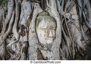 mahathat, tête, arbre, thailand., statue, bouddha, ayutthaya, wat, racines