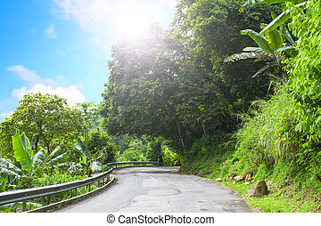 Asphalt road in tropical forest. - Mahe. Seychelles island....