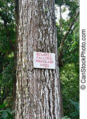 mahogany pod sign