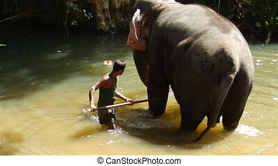 mahout and elephant in the river.