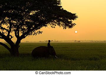 mahout, silhouette, zonopkomst, elefant
