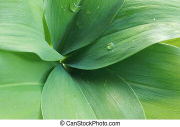 mai, feuilles, lis