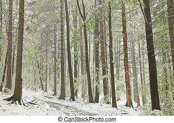 mai, piste, forêt, matin
