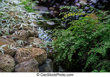Maiden fern by the stream on the background of stones and tradescantia.