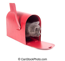 mail order kitten - Gray kitten and red mailbox on white...