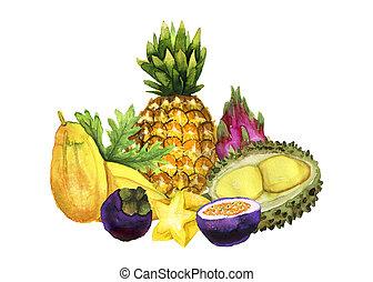 main, aquarelle, clair, fruit, dessiné, tropique, composition