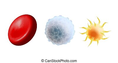 Main blood cells in scale - erythrocyte, thrombocyte and ...