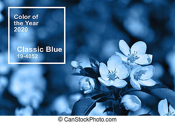 Main color trend 2020 classic blue. Apple blossoms in spring